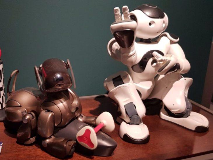 Cane robot Aibo (produzione Sony) e robot Nao, Istituto di Biorobotica Polo Sant'Anna Valdera 1