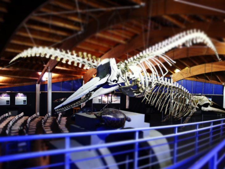 museo di storni naturale