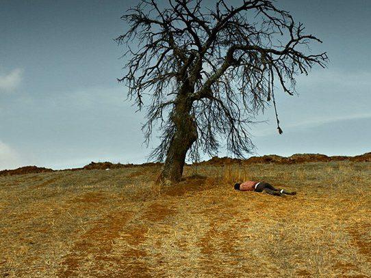 the_wild_pear_tree-2