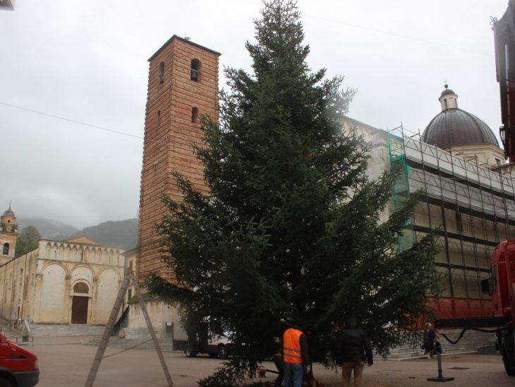 Foto è arrivato abete di Natale in Piazza Duomo