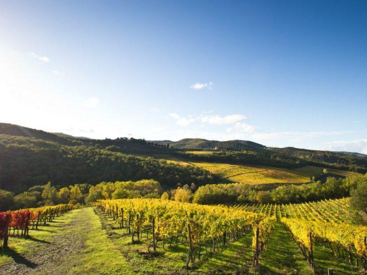 GIAHS a MIDA 2019_Colline terrazzate Lamole in Chianti