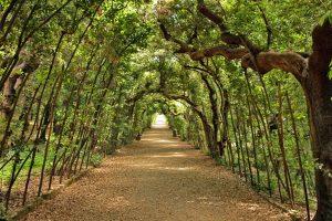 giardino-boboli-cerchiata
