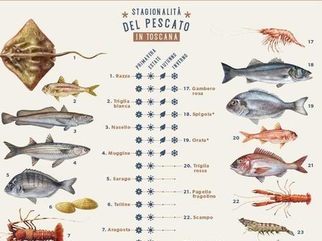 Fondi Ue: feamp calendario pescato