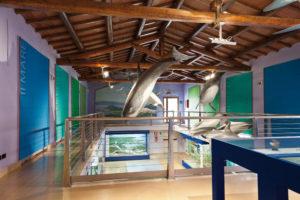 Grosseto museo storia naturale lav-4710