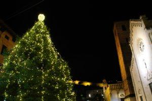 Foto vista particolare abete naturale Piazza Duomo